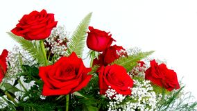Beautiful Red Roses Rosaceae Rosoideae Rosa Arranged with White Baby`s Breath for Valent. Beautiful Red Roses Rosaceae Rosoideae Rosa Arranged with White Baby`s Royalty Free Stock Photo