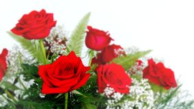 Beautiful Red Roses Rosaceae Rosoideae Rosa Arrangement with White Baby`s Breath. Beautiful Red Roses Rosaceae Rosoideae Rosa Arranged with White Baby`s Breath Royalty Free Stock Photo
