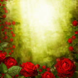 Beautiful  red roses background Royalty Free Stock Photos