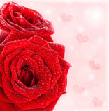 Beautiful red roses border with hearts Royalty Free Stock Image