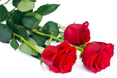 Beautiful Red Roses Flower Isolated on White Stock Images