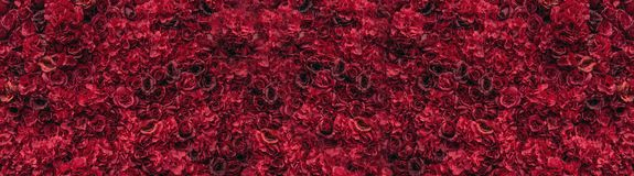 Beautiful red roses. Flower wall. Close-up of huge red roses. Place for text stock photos