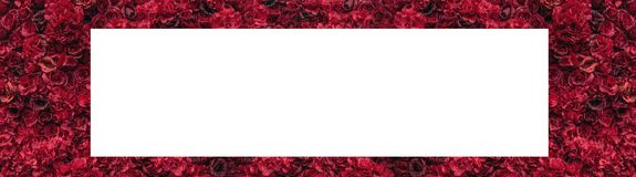 Beautiful red roses. Flower wall. Close-up of huge red roses. Place for text stock image
