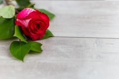 Beautiful red roses flowers lie on a wooden table Royalty Free Stock Photo