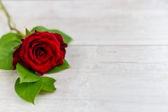 Beautiful red roses flowers lie on a wooden table Royalty Free Stock Photos