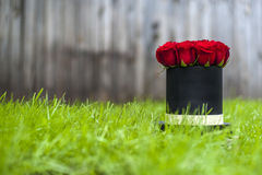 Beautiful red roses in gift box on the background of green grass. Stock Image
