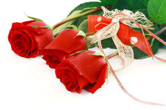 Beautiful red roses isolated on white. Three beautiful red roses isolated on white Royalty Free Stock Photography
