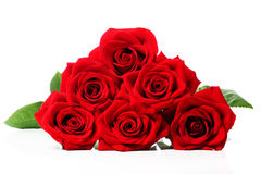 Beautiful red roses Royalty Free Stock Photography