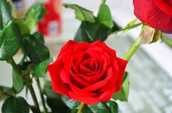 Beautiful red roses for my love. In a bright background Royalty Free Stock Images