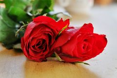 Beautiful red roses for my love. Stock Images
