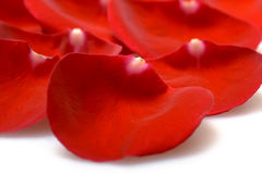 Beautiful red roses petals Stock Photos