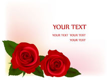 Beautiful red roses, vector Royalty Free Stock Photos