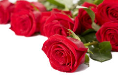 Beautiful red roses on a white background Royalty Free Stock Photography