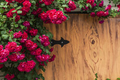 Beautiful red roses on a wooden background. Royalty Free Stock Image