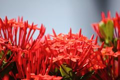 Beautiful red spike flower in fresh nature stock photography