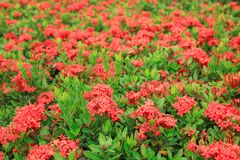 Beautiful red spike flowers blooming and green leaf stock photo