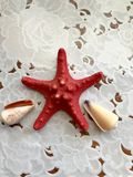 A beautiful red starfish lies adorned with seashells on a white cloth background. Marine background stock images