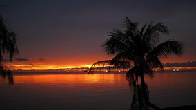 Beautiful red sunset on the beach with a palm tree. Beautiful sunset on the beach with a palm tree stock footage