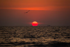 Beautiful red sunset with birds and ships on the Goa beach, India Stock Photos