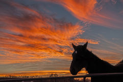 Beautiful red sunset with silhouette of a horse Stock Images