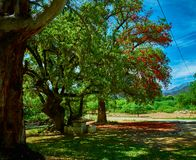 Beautiful color of tree royalty free stock image