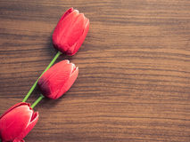Beautiful red tulip on wooden background stock photos