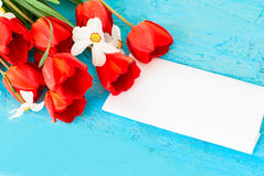 Beautiful  red  tulips and card Royalty Free Stock Images