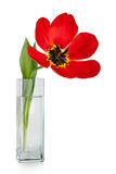 Beautiful red tulips flowers bouquet in vase stock photography