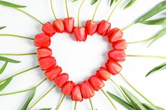 Beautiful red tulips laid out in the shape of a heart stock images