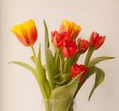 Beautiful tulips on light background, top view stock images