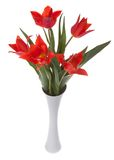 Beautiful red tulips in a vase, isolated on white Stock Photos