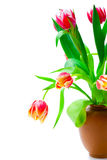 Beautiful red tulips Stock Images
