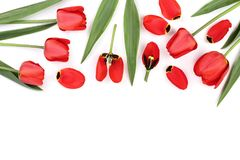 Beautiful red tulips on white background with copy space for text. Top view, flat lay Stock Photos