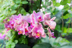 Beautiful Red vanda orchids with other plant and leaves (selecti Royalty Free Stock Photos