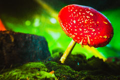 Beautiful red with white spots mushroom on moss Stock Photo