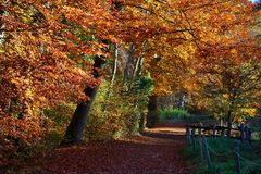 Beautiful red and yellow autumn path of Ermitage Arlesheim Royalty Free Stock Image