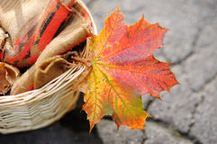 Beautiful red and yellow autumnal maple leaf Stock Photo