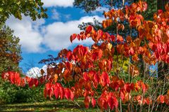 Beautiful red and yellow colord fall foliage, against green grass and trees and a stunning blue sky and white flyffy stock photos