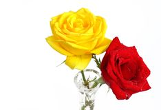 Beautiful red and yellow roses kept in vase Stock Images