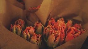 Reddish tulips stock photography