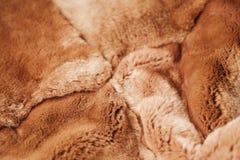 Beautiful redhead fur Rex rabbit for clothing Stock Photo