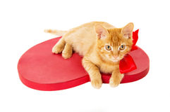 Beautiful redhead kitten with ribbon sitting on the heart Stock Photography