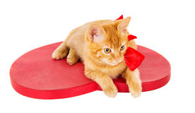 Beautiful redhead kitten with ribbon sitting on the heart Stock Images