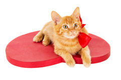Beautiful redhead kitten with ribbon sitting on the heart Royalty Free Stock Photos