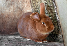 Beautiful redhead living a fat rabbit in a cage stock photography