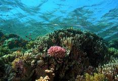 Beautiful reef royalty free stock photo