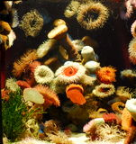 Beautiful reef. Lots of corals in a beautiful colorful reef Royalty Free Stock Image