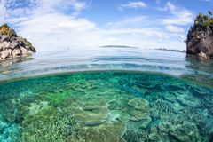 Gorgeous Coral Reef in Raja Ampat, Indonesia Royalty Free Stock Image