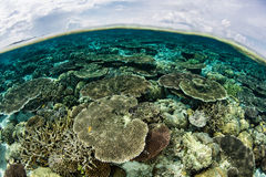 Beautiful Reef and Cloudy Sky Royalty Free Stock Photos