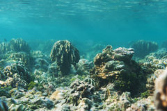 Beautiful reef and coral with blue water Royalty Free Stock Photo